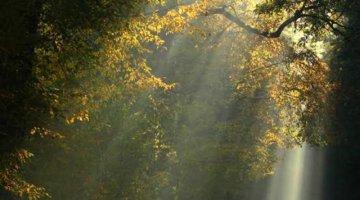 Simpatia - Abra caminho para paz